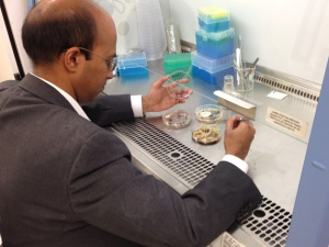 Dr. Chandra Emani works on samples in his lab at the Owensboro Centre for Business and Research.