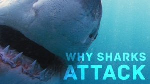 """Why Sharks Attack"" will air on KET at 8 p.m. CT May 7 and on WKU PBS at 8 p.m. and 11 p.m. CT on June 10."