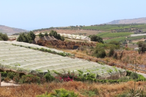 Table grape production under protective netting near Agrigento, Sicily.