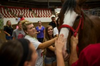 The Budweiser Clydesdales visited WKU and Bowling Green last week.