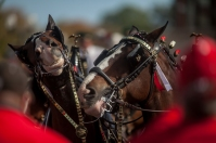 The Budweiser Clydesdales participated in pregame activities on Oct. 10.
