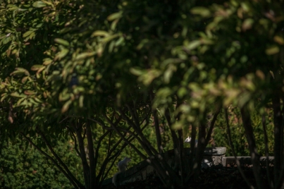 2015.10.20_ white squirrel features _lemon-94