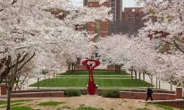 Cherry trees on WKU's campus.