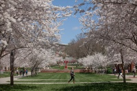 Spring on the WKU main campus.