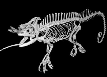 'The Skeleton Revealed' showcases WK...