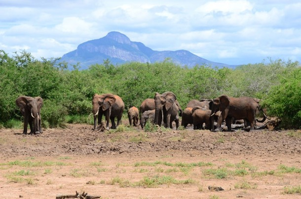 A grant from the International Elephant Foundation will support a WKU research project on human-elephant conflict in an agricultural region of Kenya.