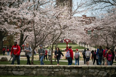Cherry trees are in bloom on the WKU campus.