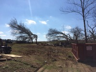 Trees heavily damaged from the tornado.