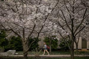 Spring scenes on the WKU campus.