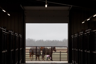 Scenes from WKU's equine program